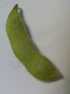 大豆のひとりごと